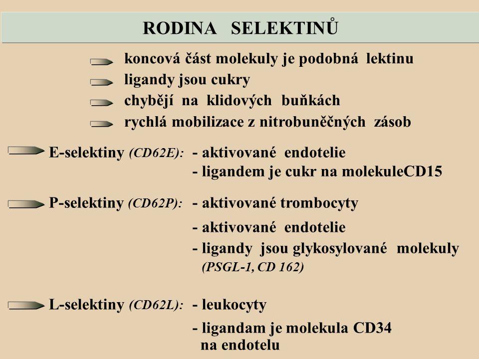 RODINA SELEKTINŮ koncová část molekuly je podobná lektinu ligandy jsou cukry chybějí na klidových buňkách rychlá mobilizace z nitrobuněčných zásob E-selektiny (CD62E): - aktivované endotelie - ligandem je cukr na molekuleCD15 P-selektiny (CD62P): - aktivované trombocyty - aktivované endotelie - ligandy jsou glykosylované molekuly (PSGL-1, CD 162) L-selektiny (CD62L): - leukocyty - ligandam je molekula CD34 na endotelu
