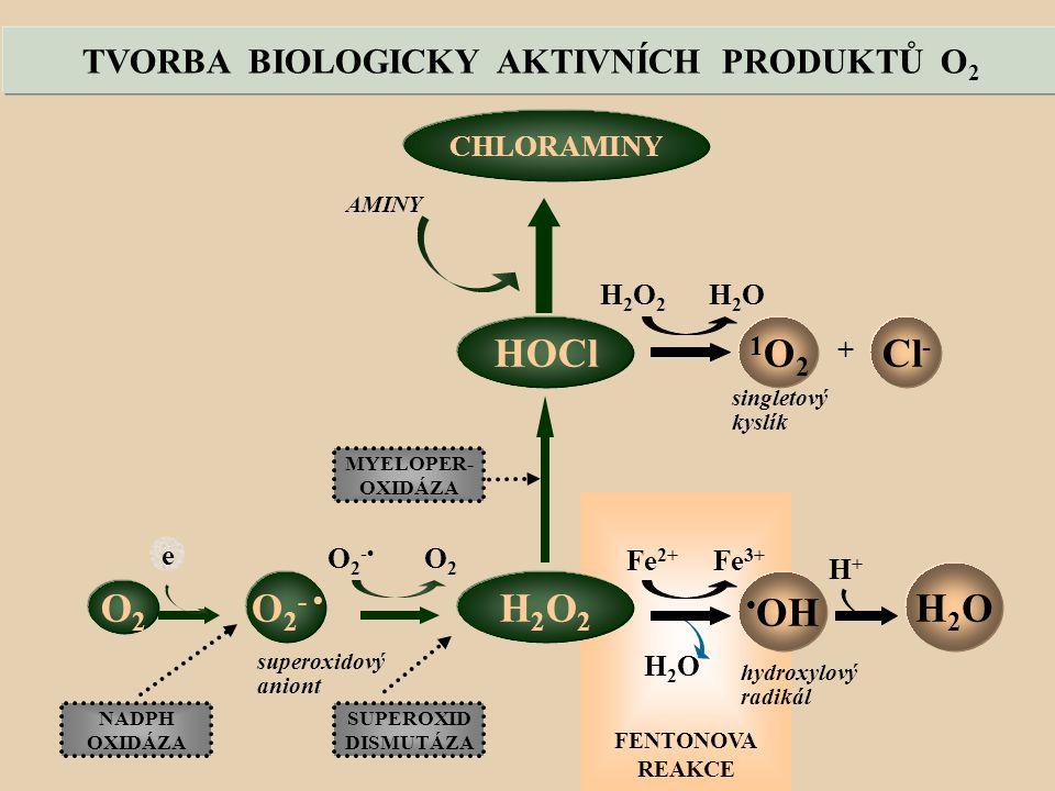 TVORBA BIOLOGICKY AKTIVNÍCH PRODUKTŮ O 2 FENTONOVA REAKCE HOCl H2O2H2O2 1O21O2 OH O2O2 Cl - H2OH2O H 2 O 2 H 2 O O 2 - O 2 Fe 2+ Fe 3+ H2OH2O e superoxidový aniont hydroxylový radikál singletový kyslík SUPEROXID DISMUTÁZA MYELOPER- OXIDÁZA NADPH OXIDÁZA + H+H+ O 2 - CHLORAMINY AMINY