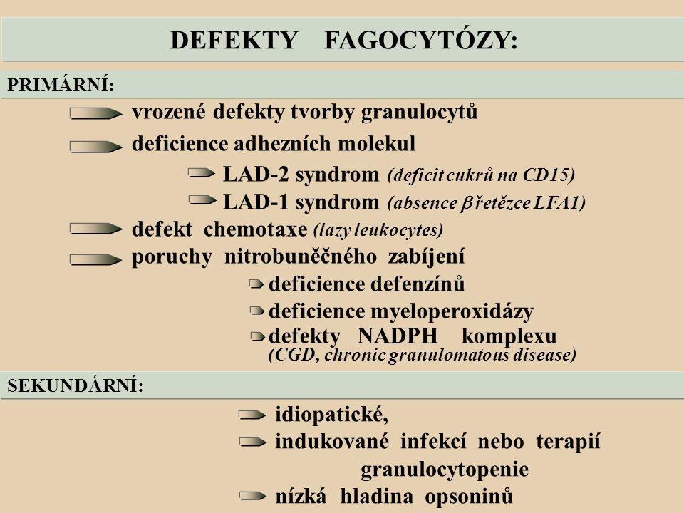 DEFEKTY FAGOCYTÓZY: vrozené defekty tvorby granulocytů deficience adhezních molekul LAD-2 syndrom (deficit cukrů na CD15) LAD-1 syndrom (absence  řetězce LFA1) defekt chemotaxe (lazy leukocytes) poruchy nitrobuněčného zabíjení deficience defenzínů deficience myeloperoxidázy defekty NADPH komplexu (CGD, chronic granulomatous disease) PRIMÁRNÍ: SEKUNDÁRNÍ: idiopatické, indukované infekcí nebo terapií granulocytopenie nízká hladina opsoninů