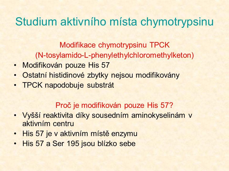 Studium aktivního místa chymotrypsinu Modifikace chymotrypsinu TPCK (N-tosylamido-L-phenylethylchloromethylketon) Modifikován pouze His 57 Ostatní his