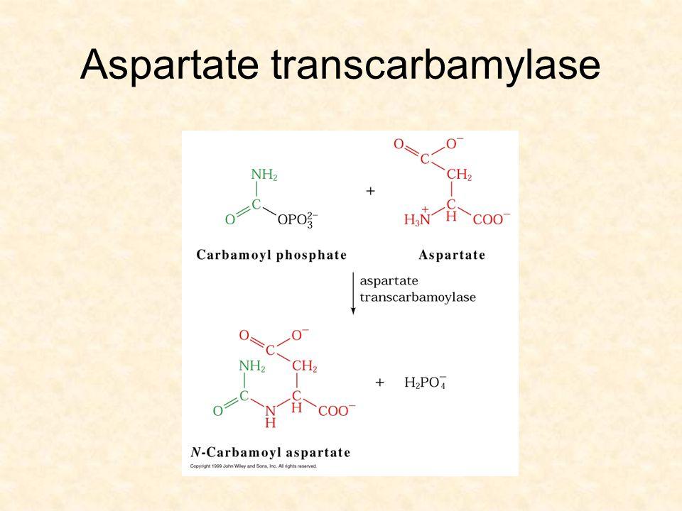 Aspartate transcarbamylase