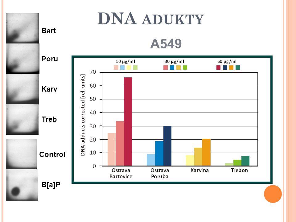 DNA ADUKTY A549 Bart Poru Karv Treb Control B[a]P