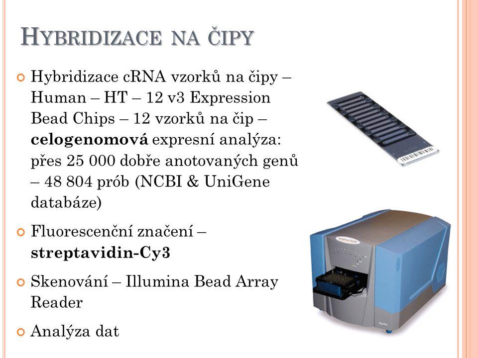 H YBRIDIZACE NA ČIPY Hybridizace cRNA vzorků na čipy – Human – HT – 12 v3 Expression Bead Chips – 12 vzorků na čip – celogenomová expresní analýza: přes 25 000 dobře anotovaných genů – 48 804 prób (NCBI & UniGene databáze) Fluorescenční značení – streptavidin-Cy3 Skenování – Illumina Bead Array Reader Analýza dat