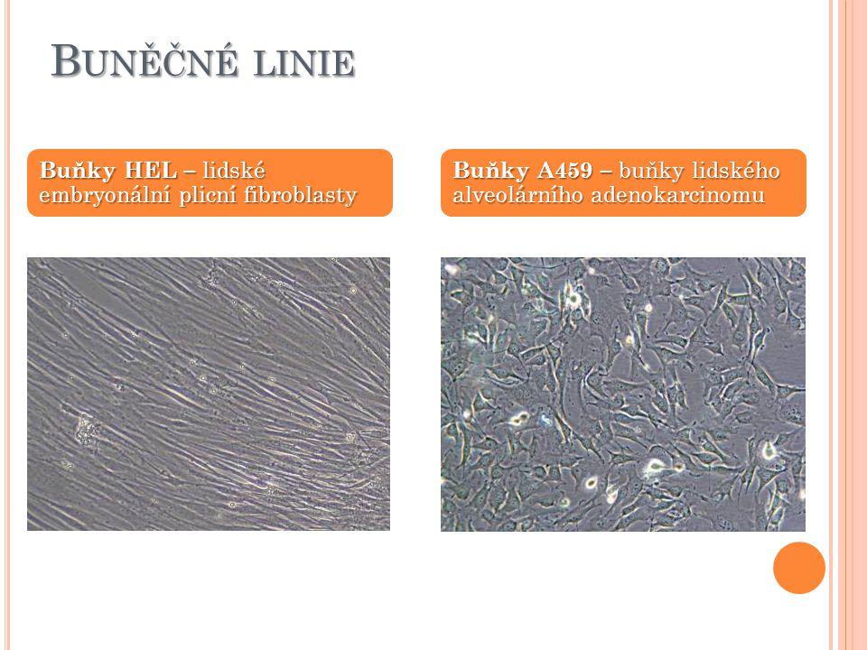 B UNĚČNÉ LINIE Buňky HEL – lidské embryonální plicní fibroblasty Buňky A459 – buňky lidského alveolárního adenokarcinomu
