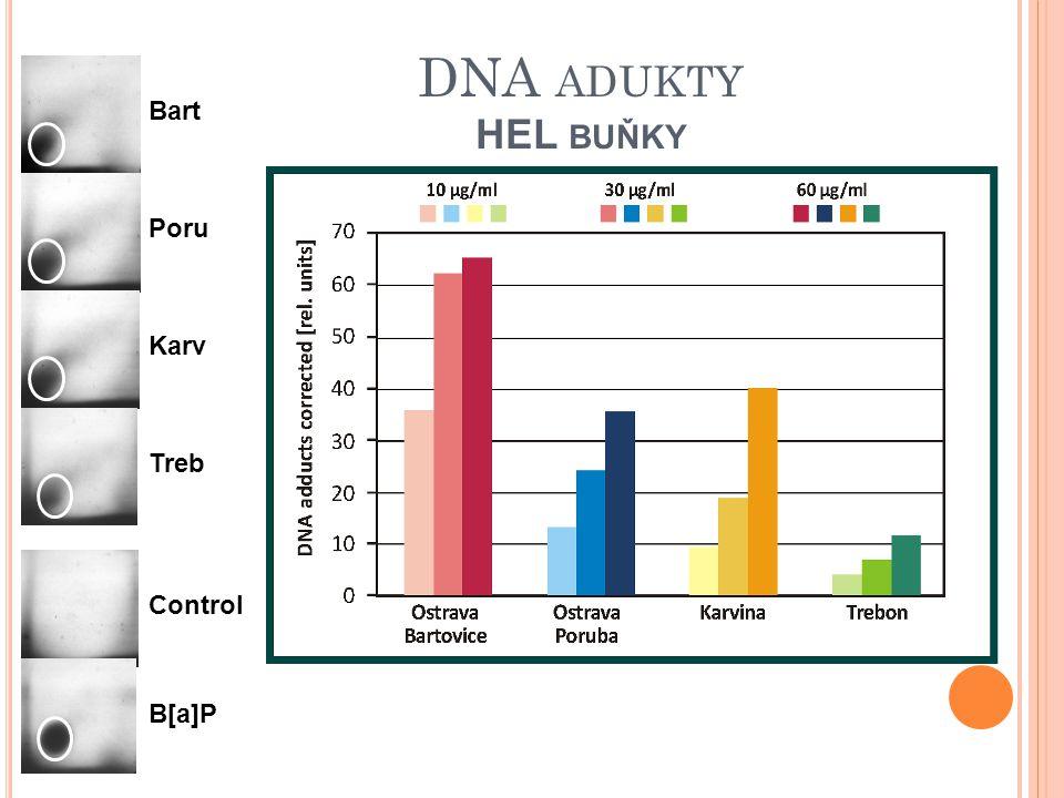 DNA ADUKTY HEL BUŇKY Control Bart Poru Karv Treb B[a]P