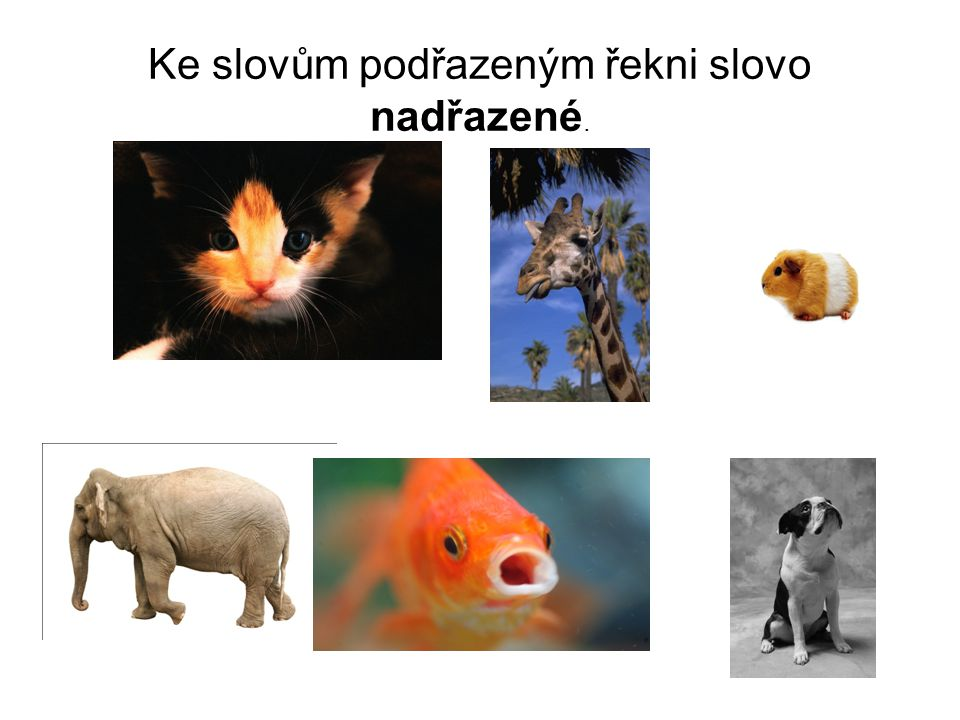 Řešení Slovo nadřazené: zvířata.