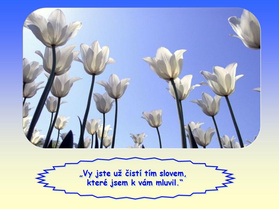 """Jeden překrásný žalm praví: """"… stvoř mi, Bože, čisté srdce."""