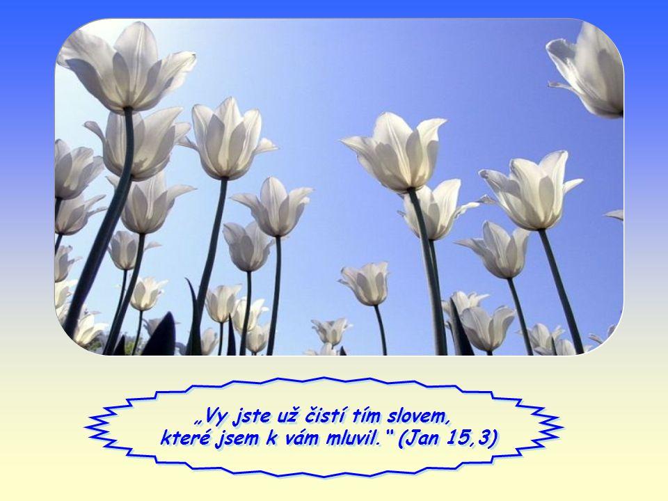 """""""Vy jste už čistí tím slovem, které jsem k vám mluvil. (Jan 15,3) """"Vy jste už čistí tím slovem, které jsem k vám mluvil. (Jan 15,3)"""