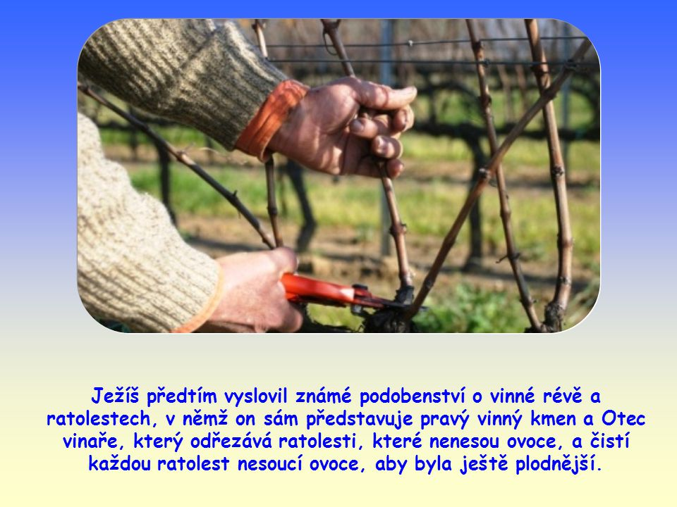 Ježíš předtím vyslovil známé podobenství o vinné révě a ratolestech, v němž on sám představuje pravý vinný kmen a Otec vinaře, který odřezává ratolesti, které nenesou ovoce, a čistí každou ratolest nesoucí ovoce, aby byla ještě plodnější.