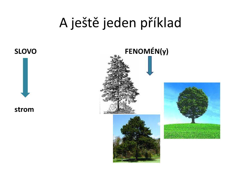 A ještě jeden příklad SLOVO strom FENOMÉN(y)