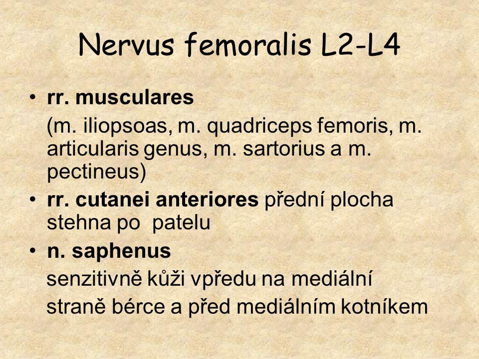 Nervus femoralis L2-L4 rr. musculares (m. iliopsoas, m. quadriceps femoris, m. articularis genus, m. sartorius a m. pectineus) rr. cutanei anteriores
