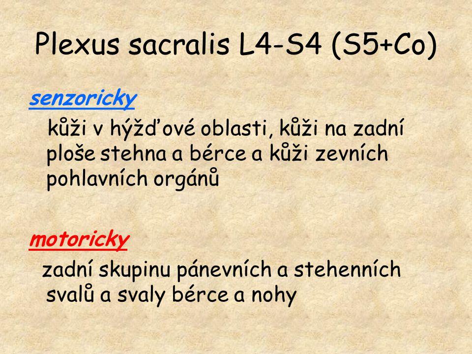 Plexus sacralis L4-S4 (S5+Co) senzoricky kůži v hýžďové oblasti, kůži na zadní ploše stehna a bérce a kůži zevních pohlavních orgánů motoricky zadní s