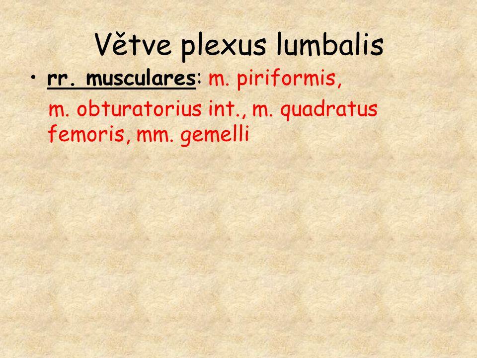 Větve plexus lumbalis rr. musculares: m. piriformis, m. obturatorius int., m. quadratus femoris, mm. gemelli