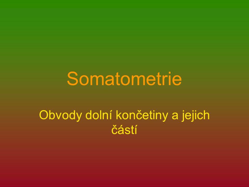 Somatometrie Obvody dolní končetiny a jejich částí