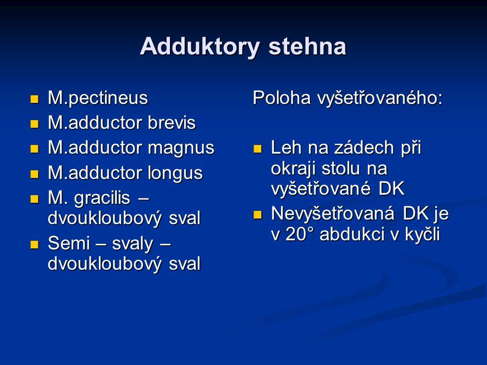 Adduktory stehna M.pectineus M.pectineus M.adductor brevis M.adductor brevis M.adductor magnus M.adductor magnus M.adductor longus M.adductor longus M.