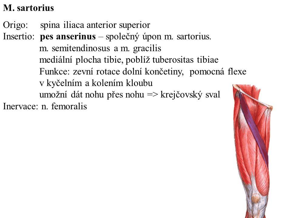 M.sartorius Origo: spina iliaca anterior superior Insertio: pes anserinus – společný úpon m.
