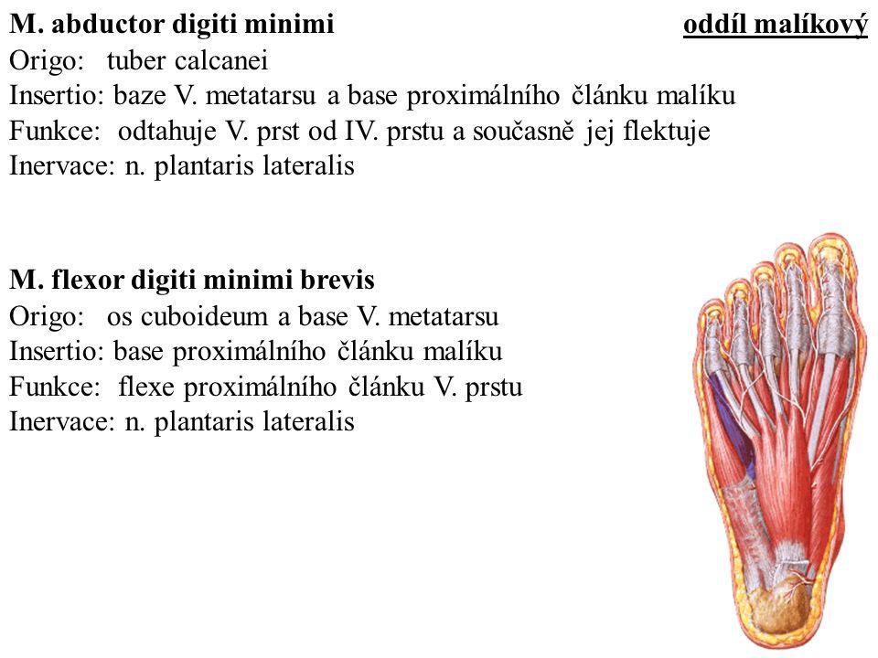 Origo: tuber calcanei Insertio: baze V.
