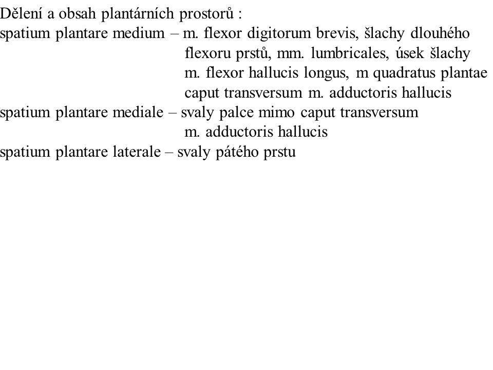 Dělení a obsah plantárních prostorů : spatium plantare medium – m.