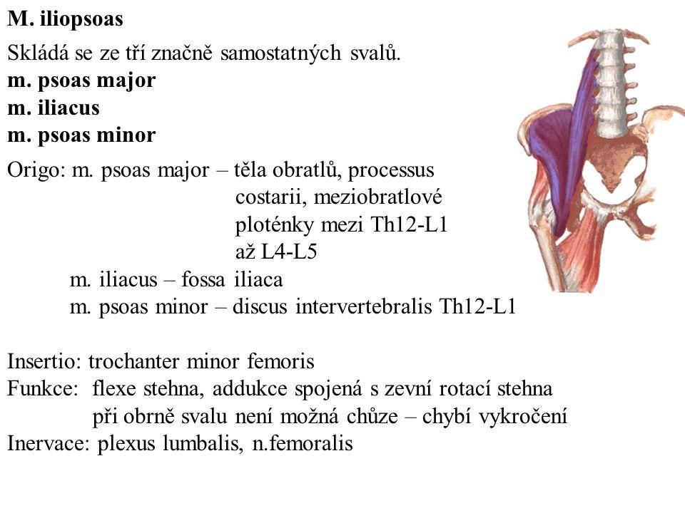 M.iliopsoas Skládá se ze tří značně samostatných svalů.