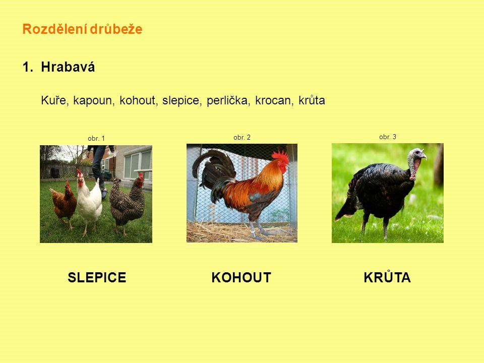 Rozdělení drůbeže 1.Hrabavá Kuře, kapoun, kohout, slepice, perlička, krocan, krůta obr.
