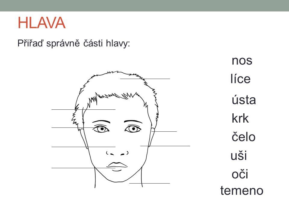 HLAVA Přiřaď správně části hlavy: čelo temeno uši oči nos líce ústa krk