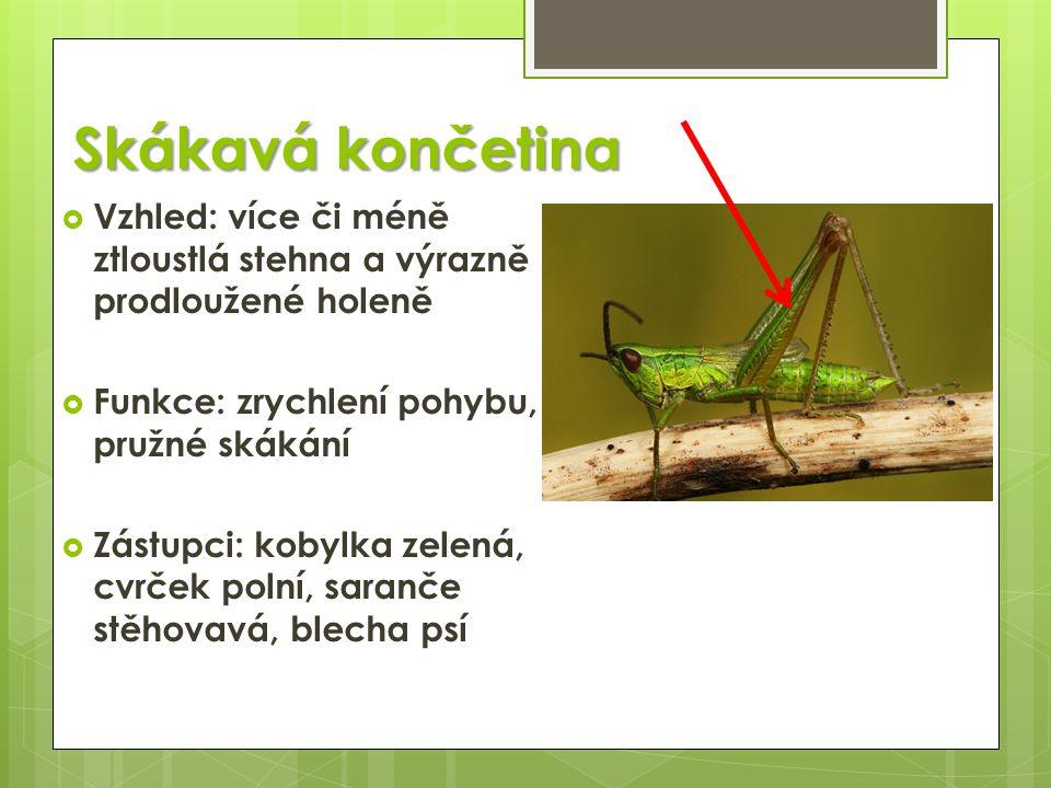 Skákavá končetina  Vzhled: více či méně ztloustlá stehna a výrazně prodloužené holeně  Funkce: zrychlení pohybu, pružné skákání  Zástupci: kobylka