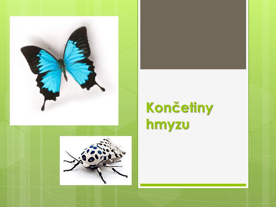 Končetiny hmyzu