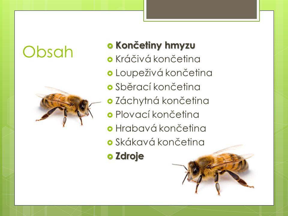 Obsah  Končetiny hmyzu  Kráčivá končetina  Loupeživá končetina  Sběrací končetina  Záchytná končetina  Plovací končetina  Hrabavá končetina  S