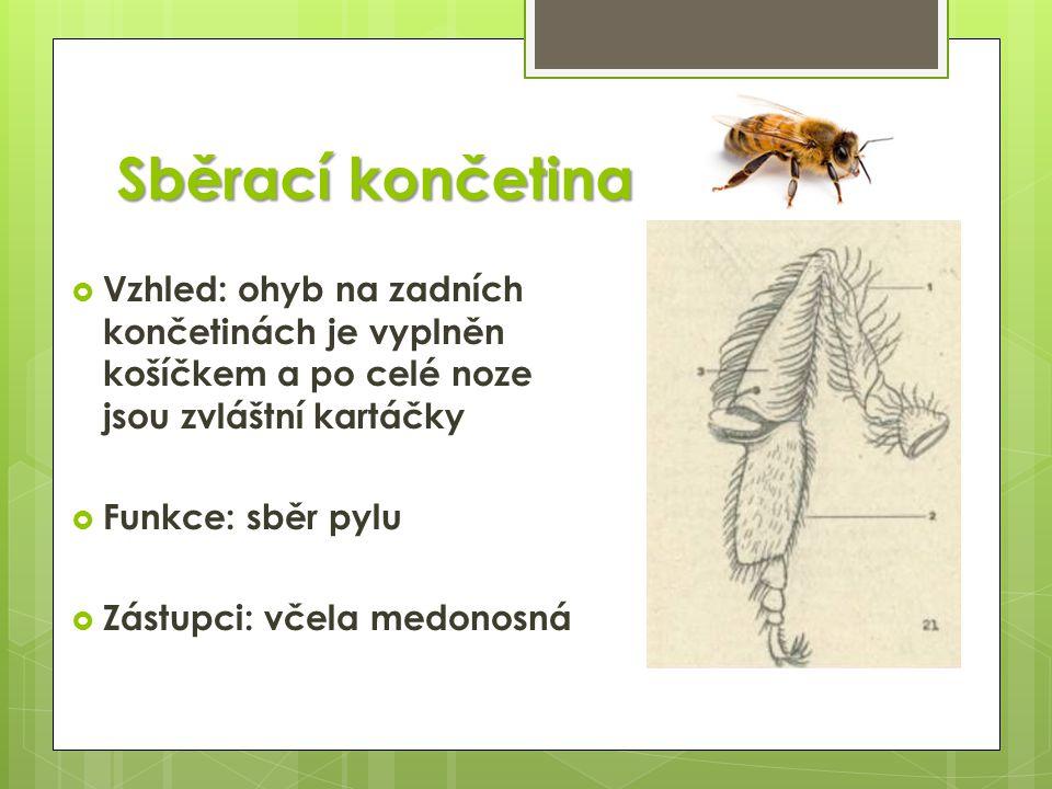Sběrací končetina  Vzhled: ohyb na zadních končetinách je vyplněn košíčkem a po celé noze jsou zvláštní kartáčky  Funkce: sběr pylu  Zástupci: včel