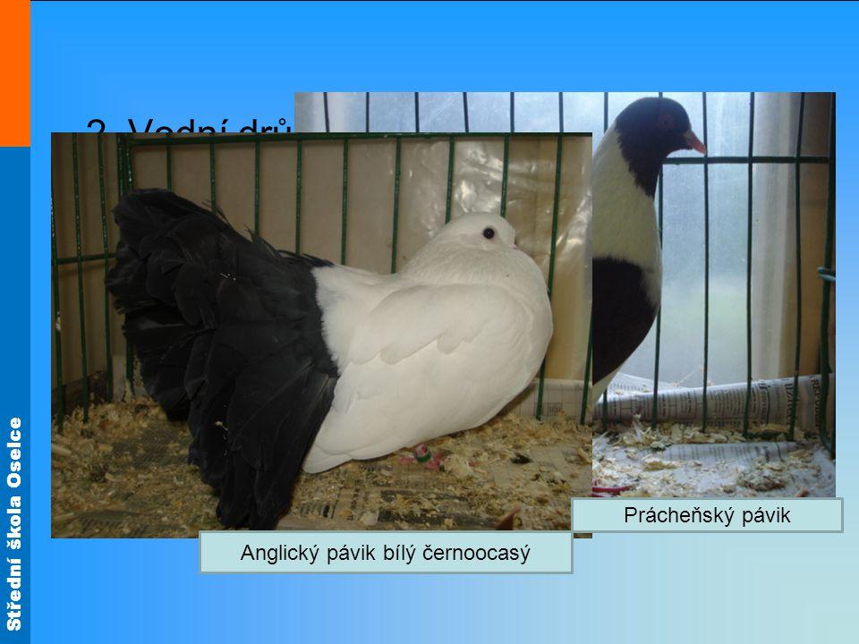 Střední škola Oselce 2. Vodní drůbež - husa, kachna maso mají tmavé je tučnější, více kalorické velmi chutné 3. Holubi Anglický pávik bílý černoocasý