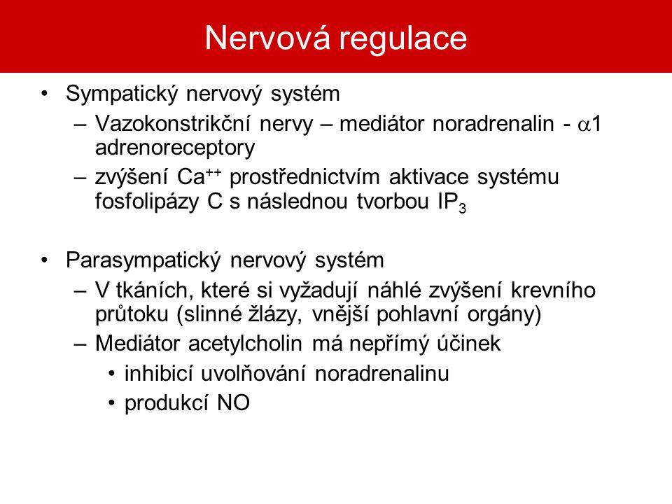 Nervová regulace Sympatický nervový systém –Vazokonstrikční nervy – mediátor noradrenalin -  1 adrenoreceptory –zvýšení Ca ++ prostřednictvím aktivac