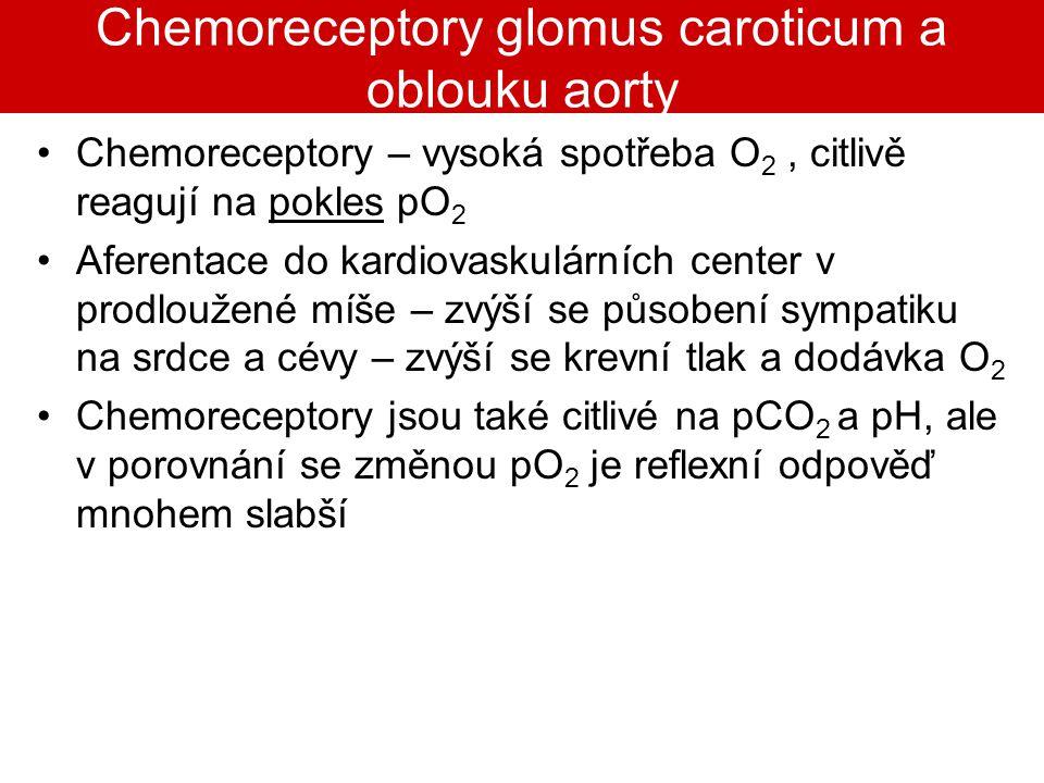 Chemoreceptory glomus caroticum a oblouku aorty Chemoreceptory – vysoká spotřeba O 2, citlivě reagují na pokles pO 2 Aferentace do kardiovaskulárních