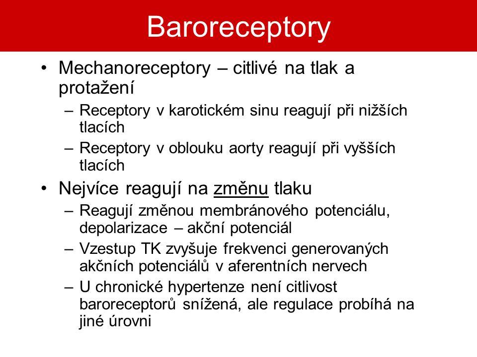 Baroreceptory Mechanoreceptory – citlivé na tlak a protažení –Receptory v karotickém sinu reagují při nižších tlacích –Receptory v oblouku aorty reagu