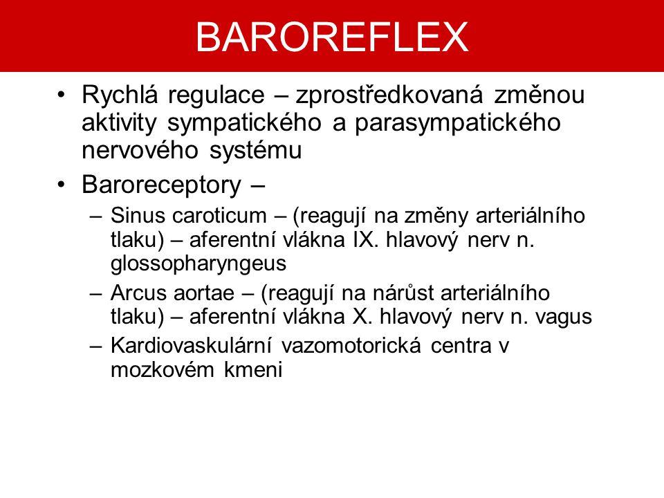 BAROREFLEX Rychlá regulace – zprostředkovaná změnou aktivity sympatického a parasympatického nervového systému Baroreceptory – –Sinus caroticum – (rea