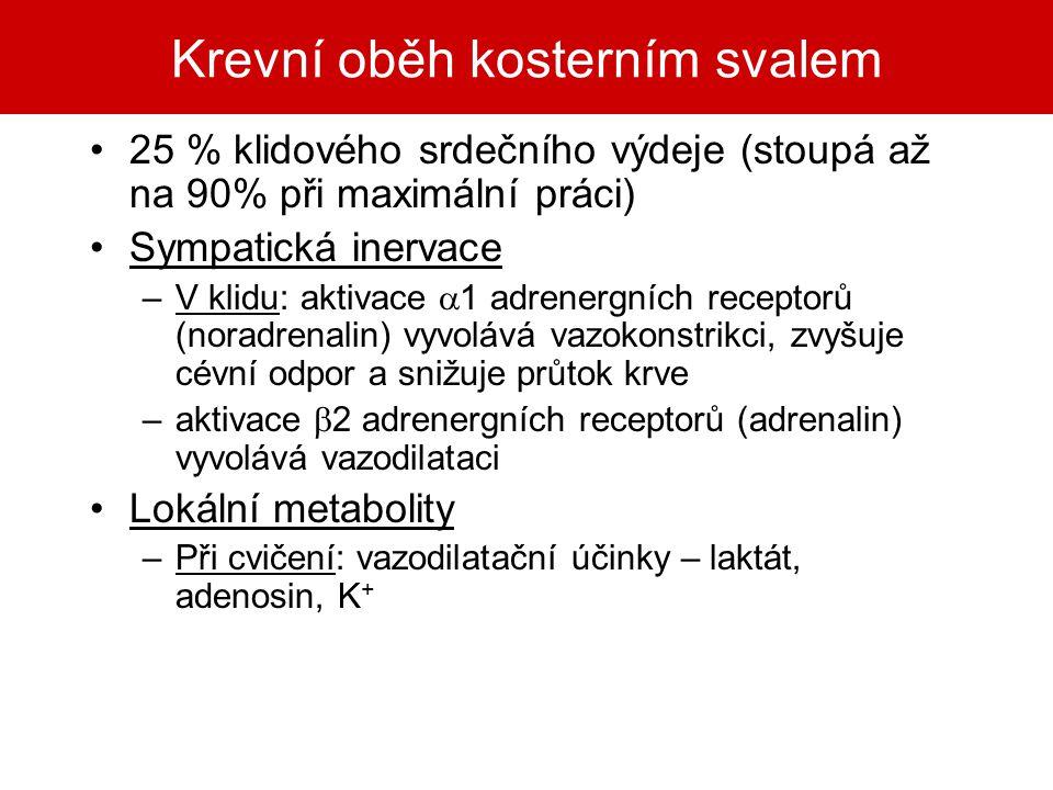 Krevní oběh kosterním svalem 25 % klidového srdečního výdeje (stoupá až na 90% při maximální práci) Sympatická inervace –V klidu: aktivace  1 adrener