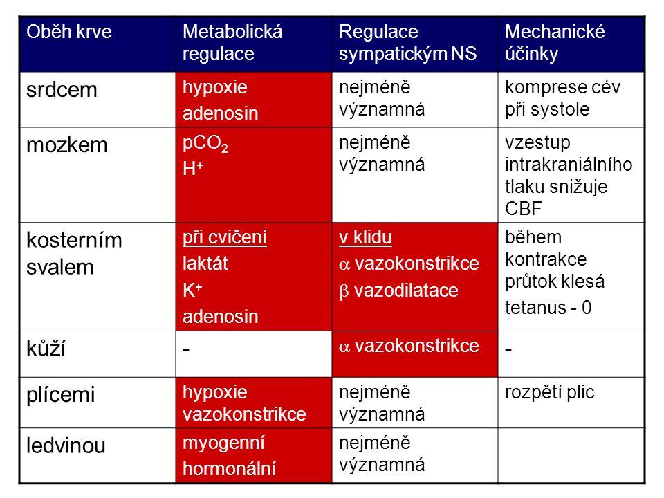 Oběh krveMetabolická regulace Regulace sympatickým NS Mechanické účinky srdcem hypoxie adenosin nejméně významná komprese cév při systole mozkem pCO 2