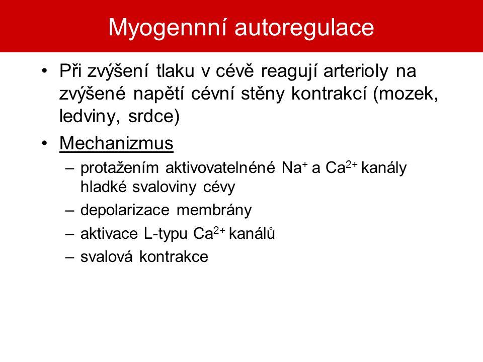 Myogennní autoregulace Při zvýšení tlaku v cévě reagují arterioly na zvýšené napětí cévní stěny kontrakcí (mozek, ledviny, srdce) Mechanizmus –protaže