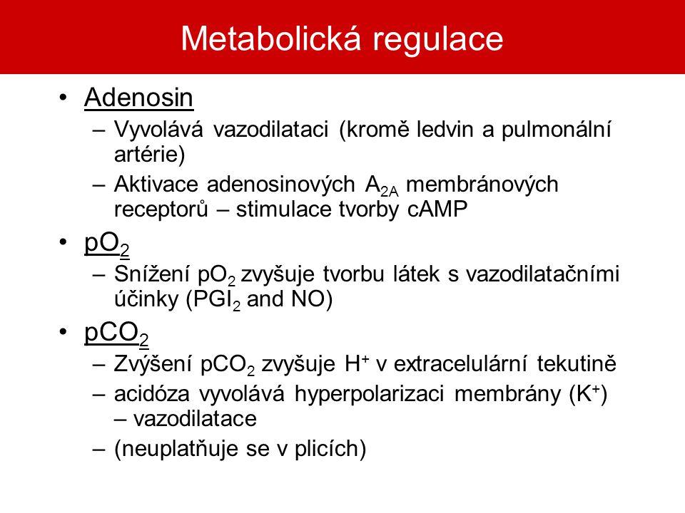 Metabolická regulace Adenosin –Vyvolává vazodilataci (kromě ledvin a pulmonální artérie) –Aktivace adenosinových A 2A membránových receptorů – stimula