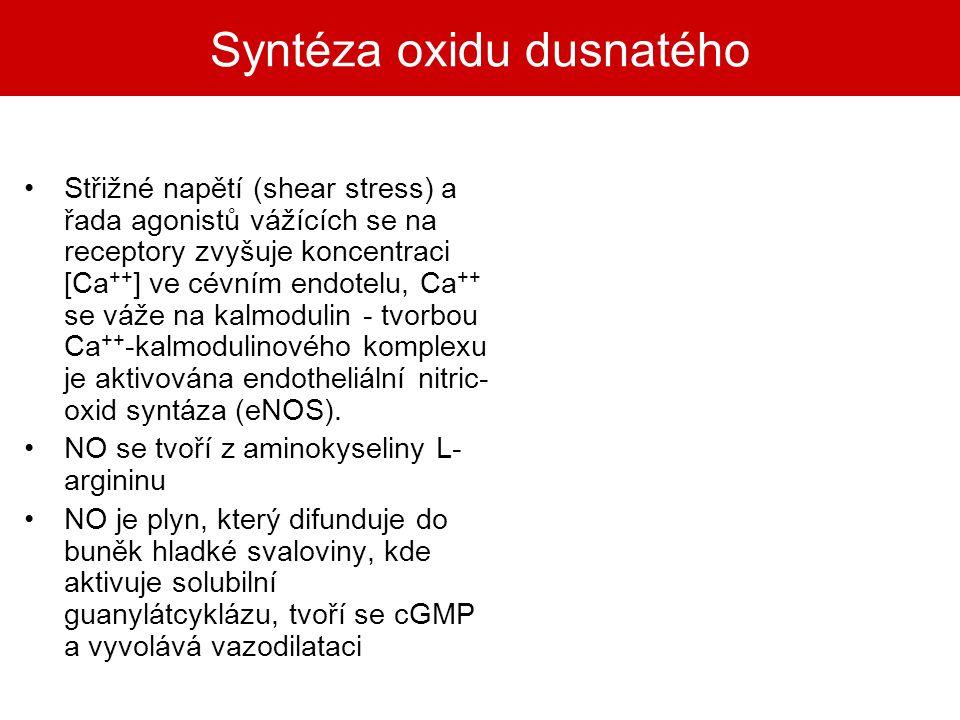 Syntéza oxidu dusnatého Střižné napětí (shear stress) a řada agonistů vážících se na receptory zvyšuje koncentraci [Ca ++ ] ve cévním endotelu, Ca ++