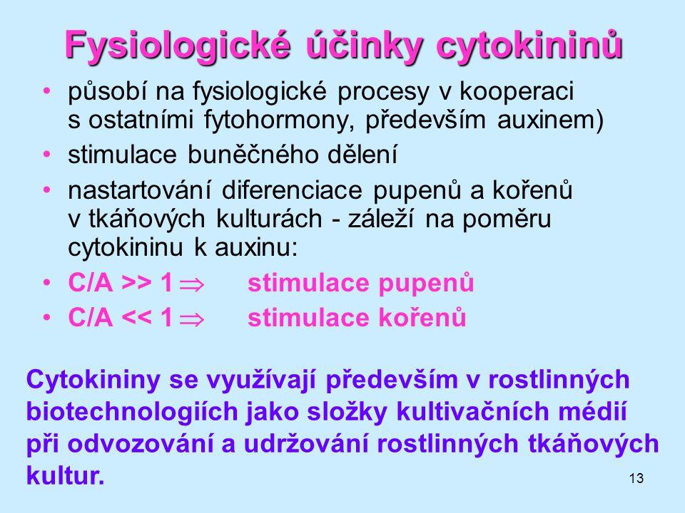 13 Fysiologické účinky cytokininů působí na fysiologické procesy v kooperaci s ostatními fytohormony, především auxinem) stimulace buněčného dělení na