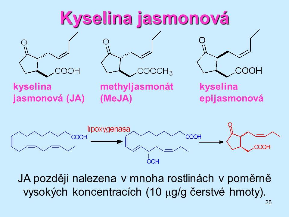 25 Kyselina jasmonová kyselina jasmonová (JA) methyljasmonát (MeJA) kyselina epijasmonová JA později nalezena v mnoha rostlinách v poměrně vysokých ko