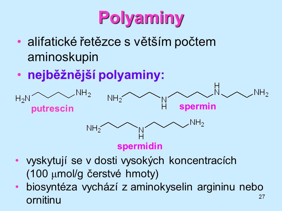 27 Polyaminy alifatické řetězce s větším počtem aminoskupin nejběžnější polyaminy: putrescin spermidin spermin vyskytují se v dosti vysokých koncentra
