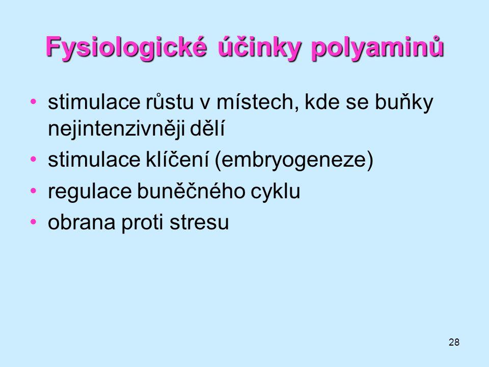 28 Fysiologické účinky polyaminů stimulace růstu v místech, kde se buňky nejintenzivněji dělí stimulace klíčení (embryogeneze) regulace buněčného cykl