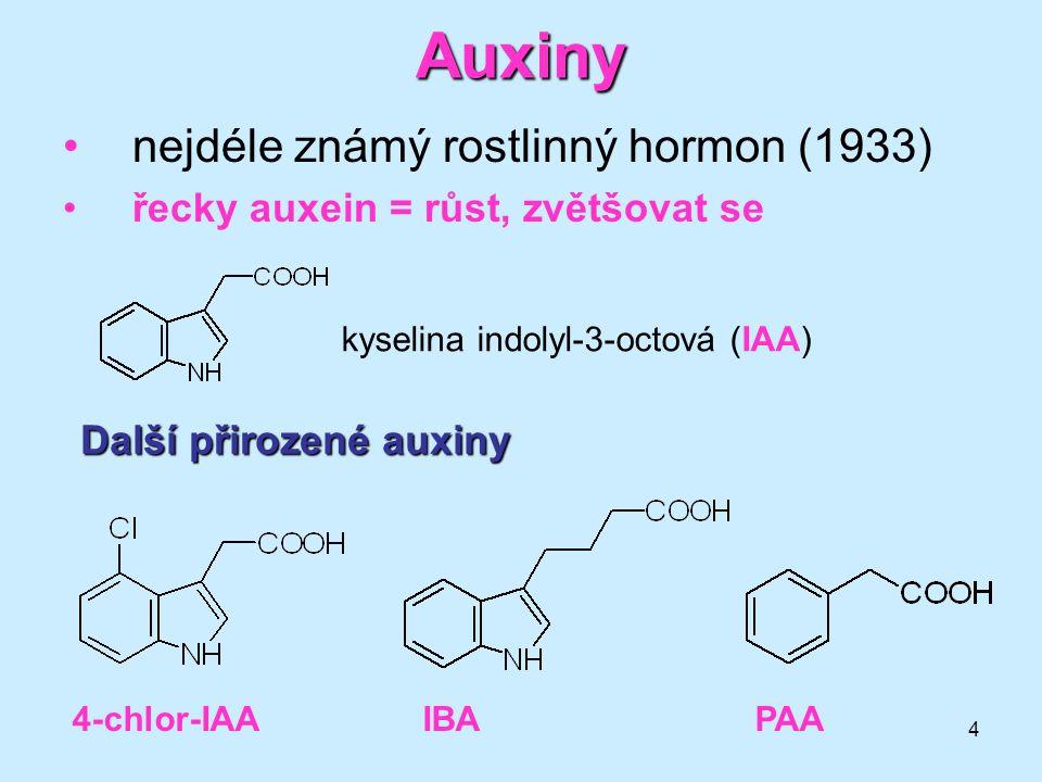 5 Auxiny Fysiologické účinky:Fysiologické účinky: stimulace dlouživého růstu regulace tropismů (geotropismus, fototropismus) fysiologická koncentrace 0,1–10 mmol/l vyšší koncentrace růst naopak inhibují AuxinyAuxiny jsou produkovány nejvíce v mladých listech, květech a plodech (apikální část rostliny) a transportovány směrem ke kořenům.