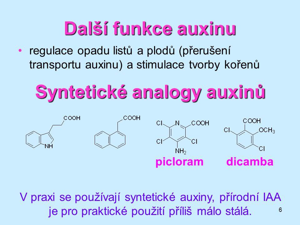 6 Další funkce auxinu regulace opadu listů a plodů (přerušení transportu auxinu) a stimulace tvorby kořenů Syntetické analogy auxinů picloramdicamba V