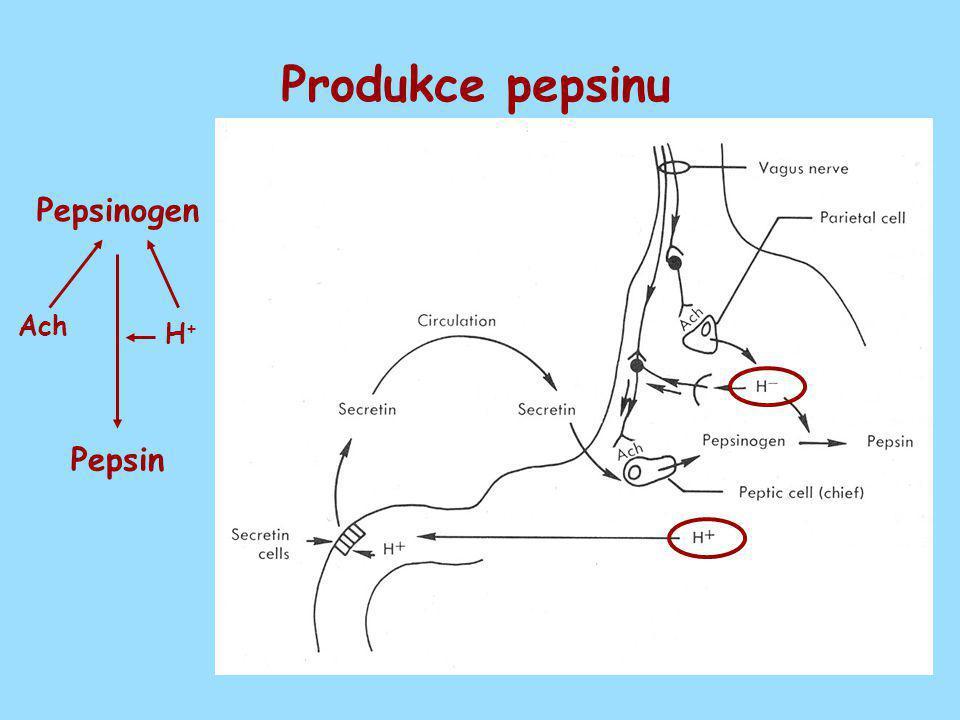 Produkce pepsinu Ach H+ H+ Pepsinogen Pepsin