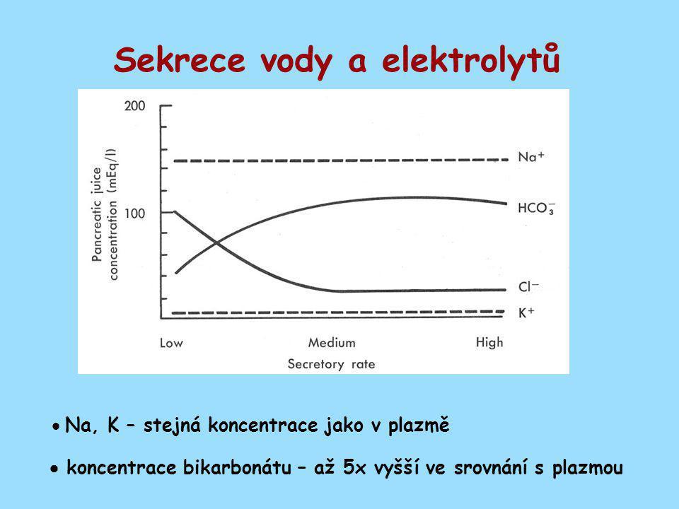 Sekrece vody a elektrolytů  Na, K – stejná koncentrace jako v plazmě  koncentrace bikarbonátu – až 5x vyšší ve srovnání s plazmou