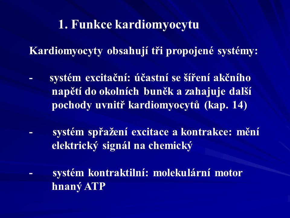 1 Systém spřažení excitace a kontrakce Elektrochemické spřažení mezi sarkolemou a nitrobuněčnými organelami zajišťuje systém intracelulárních membrán (sarkotubulární systém, obr.