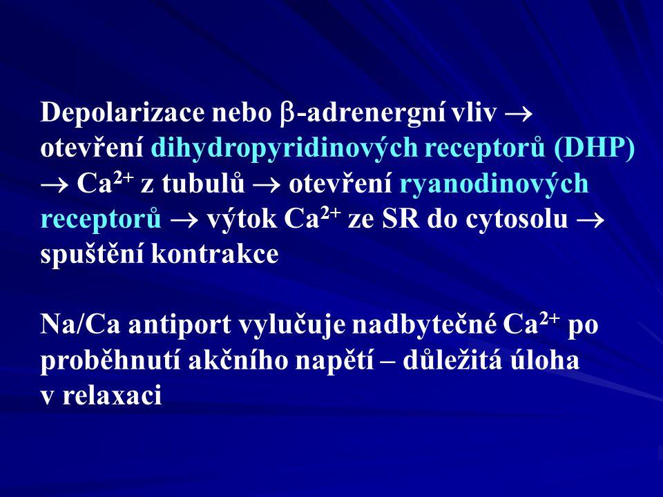 Kontraktilní systém Ca 2+ + troponin C troponin I vazba můstků na aktin  -stimulace   cAMP   PKA  fosforylace a otevření Ca kanálů (DHP) v T-tubulech  Ca/Ca kaskáda   intracelulární Ca 2+  zvýšení kontraktility (inotropní účinek)  -stimulace fosfolamban SERCA  urychlení relaxační fáze (tzv.