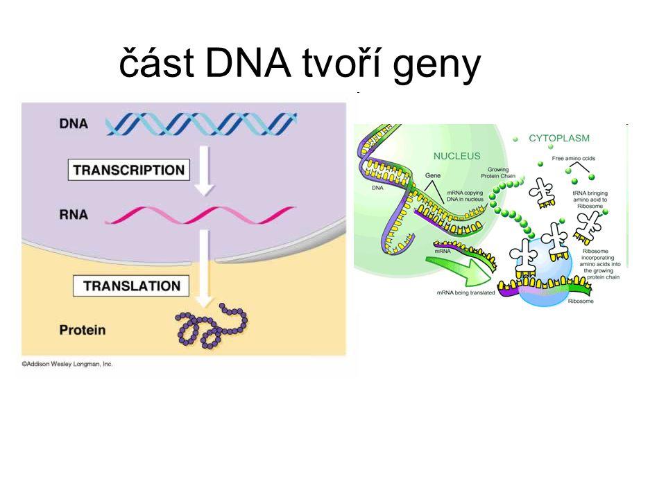 část DNA tvoří geny